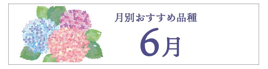 6月のおすすめ品種